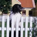 Dänemark Urlaub mit Hund